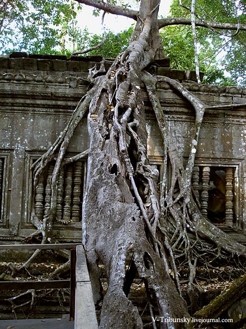 Храмы Камбоджи. Ангкор. Бенг Мелиа: путешествие в детство